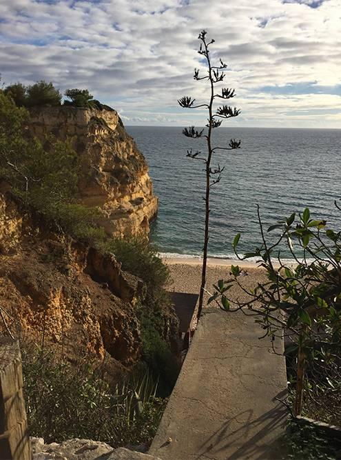 Спускаться к пляжу Прайя-Маринья придется по длинной лестнице. Учитывайте это, если будете с коляской