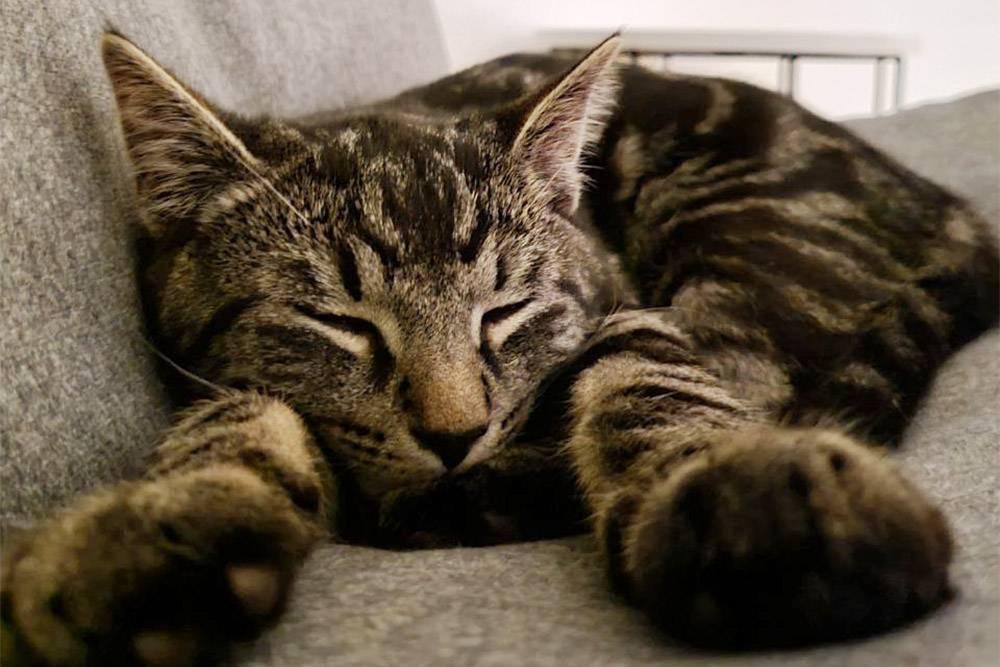 Кот в это время дрыхнет и даже не подозревает о той подлости, что мы ему приготовили