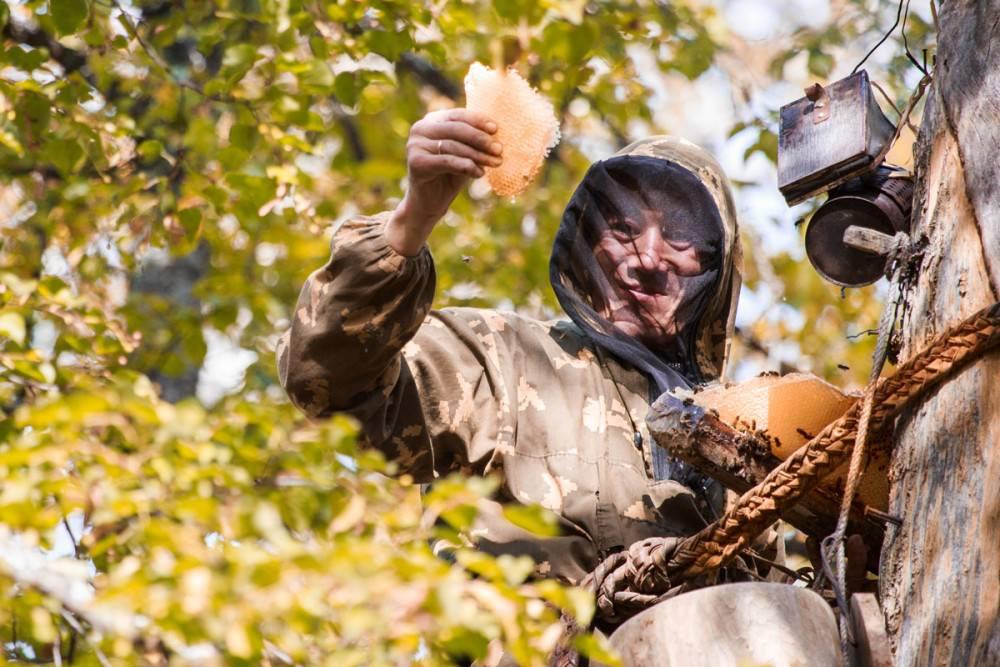 Бортничество — древний башкирский промысел. Так называют процесс добычи бортевого меда. Источник: заповедник Шульган-Таш