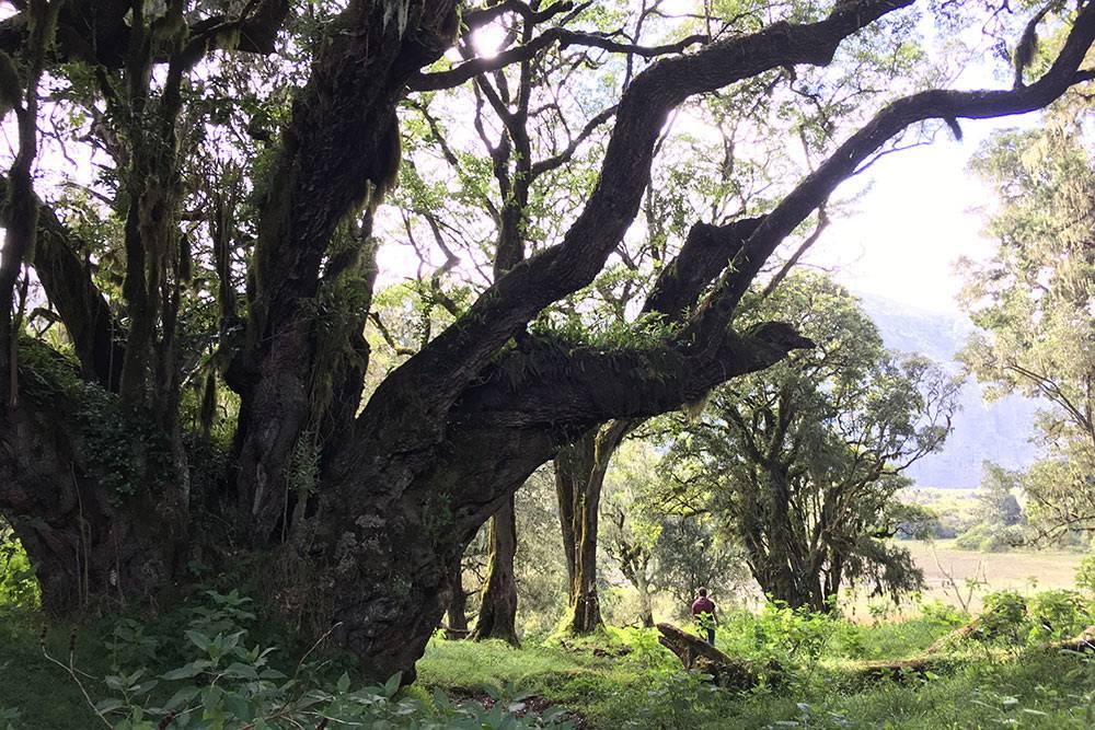 Пешее сафари кместу пикника через тропические леса