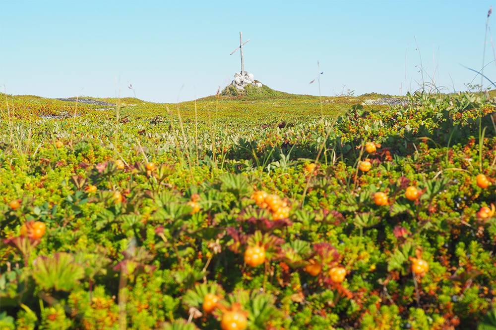 Во время прогулок по островам попадали в ягодные засады из морошки, черники и голубики, которые надолго задерживали группу. А вот грибов мы не видели совсем