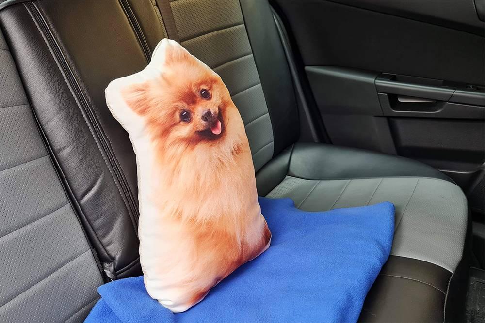 В качестве попутчика — подушка с изображением шпица, похожего на мою собаку Бусинку. Собака осталась в Москве, у подруги