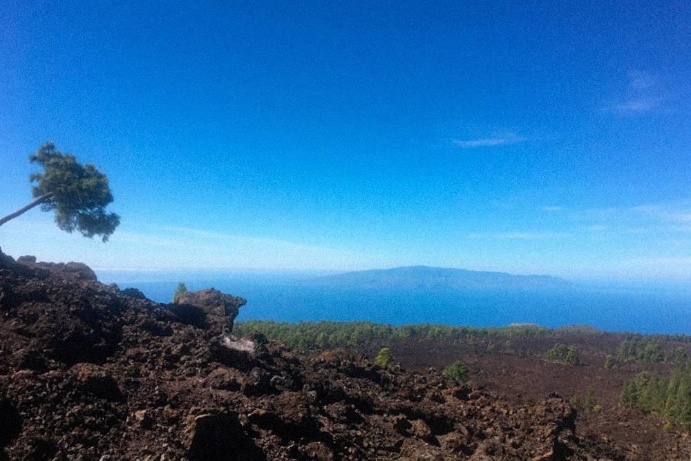 На Тенерифе сосны сочного зеленого цвета пробиваются через потоки застывшей лавы