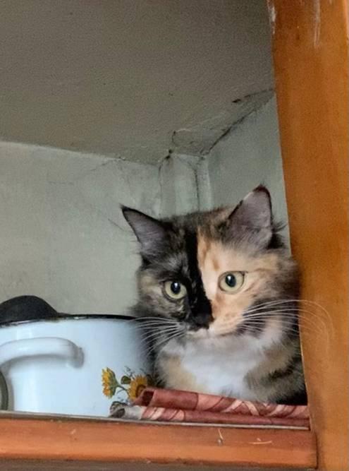 Лаки любит прятаться и залезать повыше. На фото она сидит на четвертой полке на кухне. Высота — 1,8метра, забралась сама