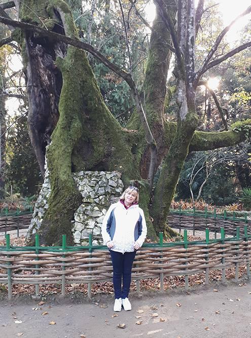 Диаметр ствола старейшей кавказской липы в ботаническом саду — 3м