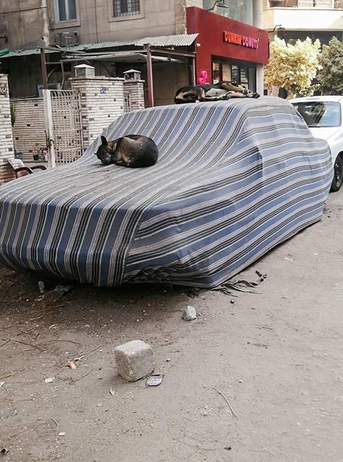 Собаки спят прямо на машине: на земле слишком горячо