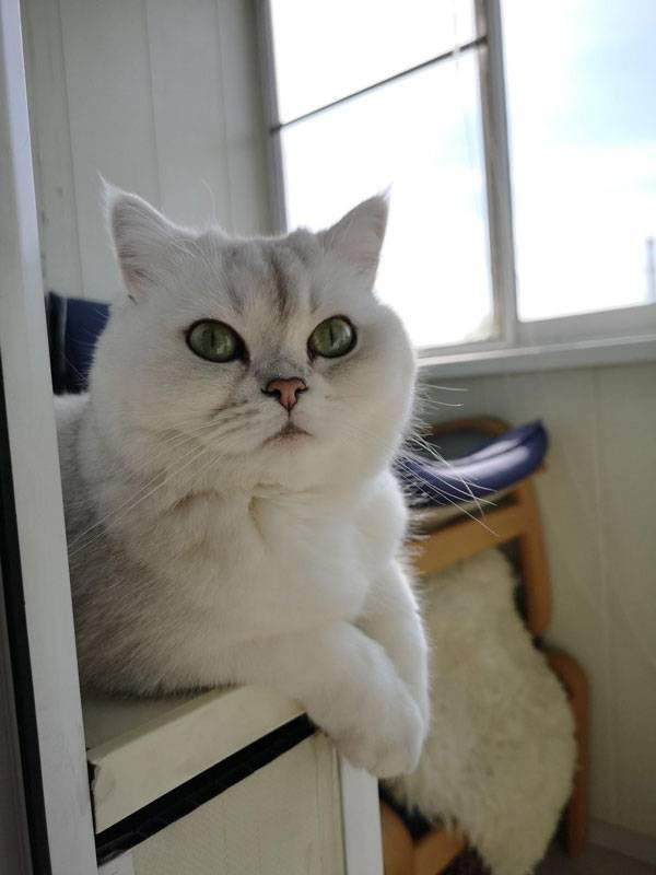 Кошка Юки благословляет эту статью