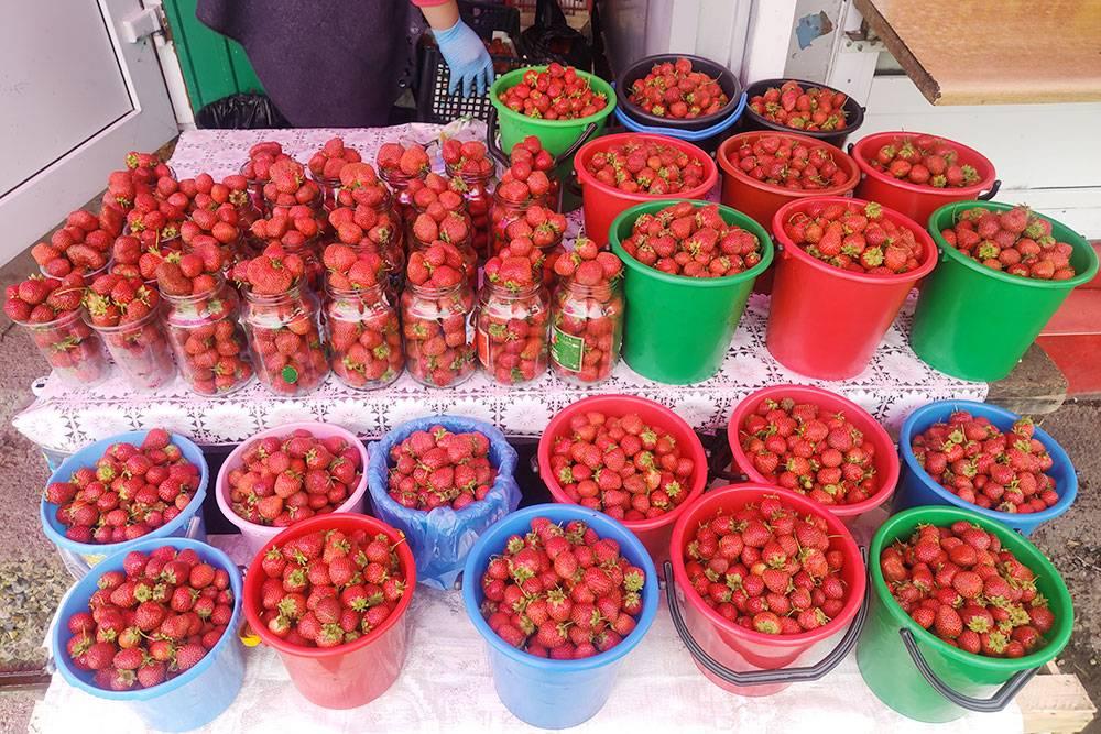 Хакасия — зона рискованного земледелия, но тут можно собирать огромные урожаи клубники, которая ничем не отличается от южной