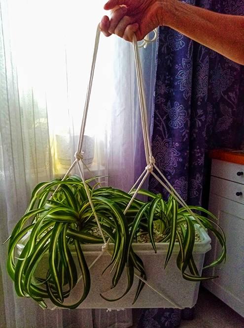 Этот простейший подвес из хозяйственной веревки я сделала сама
