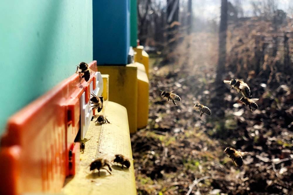 Уставшие пчелки прилетели домой. Здесь их могут подстерегать голодные шершни и осы, поэтому лучше позаботиться об их защите