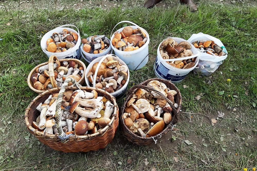 За грибами мы сами ходим, есть у нас свое грибное место