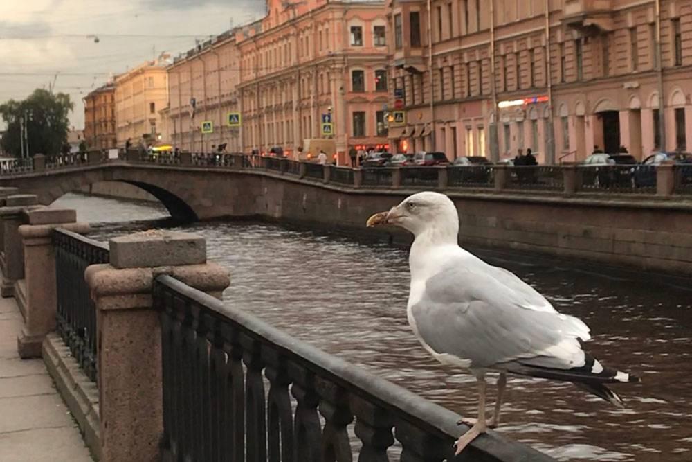 Канал Грибоедова — моелюбимое место дляпрогулок