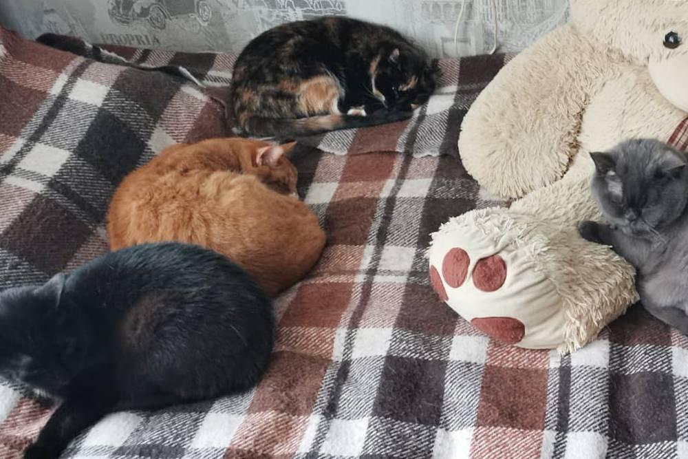 Слева направо — Гуталин, Рыжий, Клякса и Плюшка