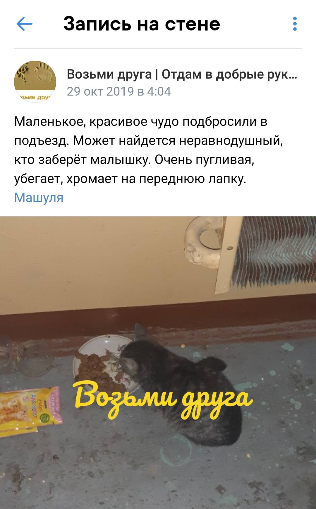 Вот так выглядят типичные посты о бездомных котах. Это пост о моей кошке Кесе. Источник: vk.com