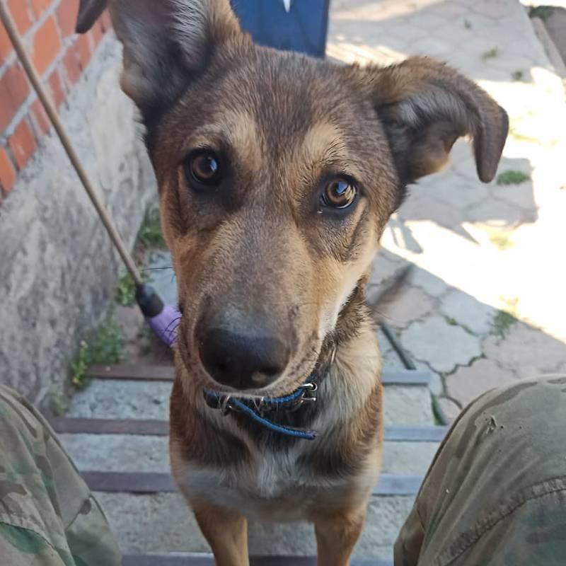 Это щенок, ему три месяца, и он все время играет, крутится и вертится, поэтому его и зовут Болтик