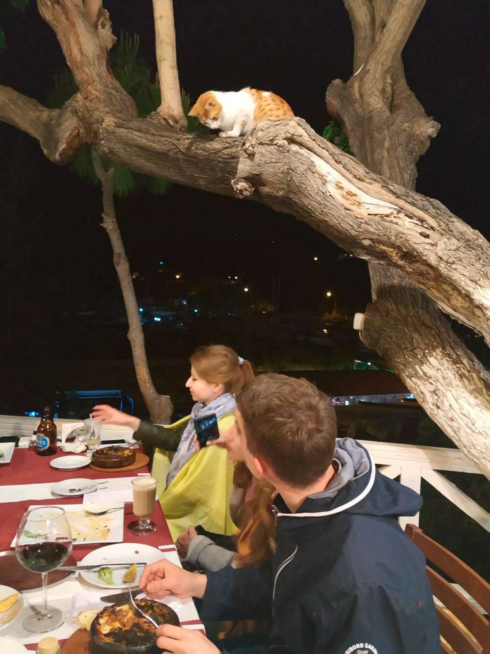 Шерстяные гости ресторана «Акин». Предложили коту стейк, он отказался — видимо, рассчитывал на креветок