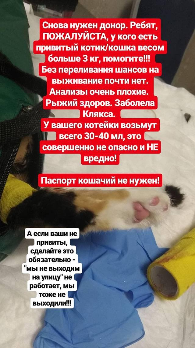 Потом заболела вторая кошка — длянее мы тоже стали искать донора