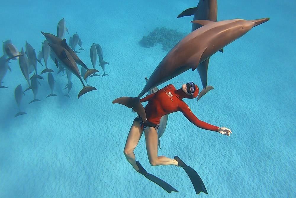 Обучение фридайвингу с дельфинами в Красном море. После курса выдаем сертификат по стандартам Федерации фридайвинга России