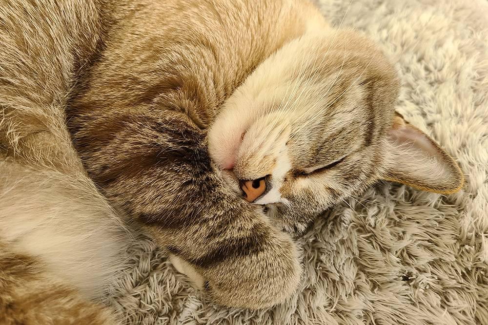 Утренний ритуал — сделать фото кошачьего носика