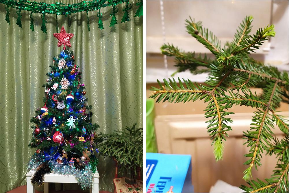 Искусственную елку мы разобрали в предпоследний день праздников. А живые веточки нас еще радуют, одна даже побеги пустила. Правда, дети их немного подъели