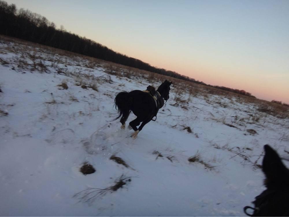 Кассандра убегает в поля. Кажется, мы даже не успели ее расседлать — столько в ней было энергии. Потом набегалась и прибежала обратно