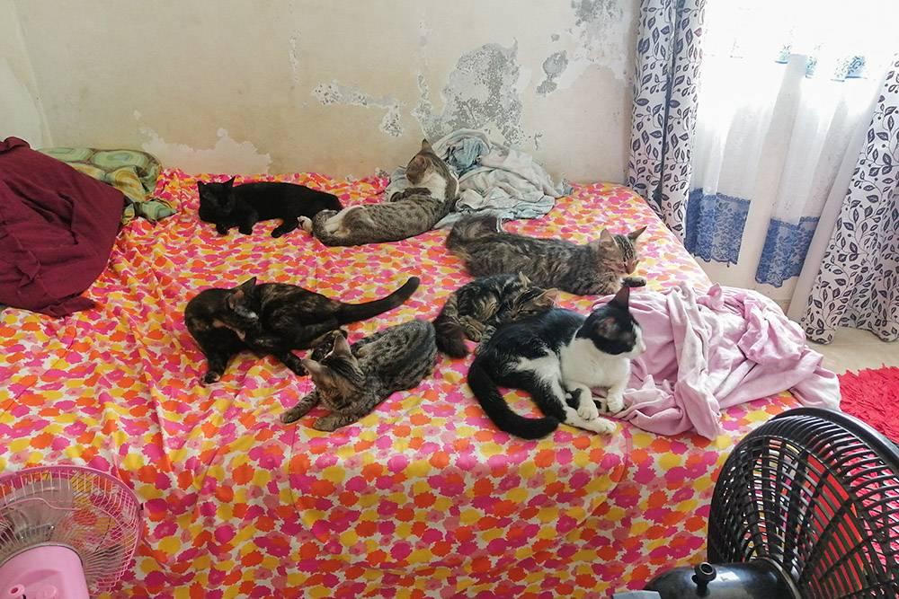 Пою кошкам песню «Человек и кошка». Стены надкроватью разъел грибок — здесь это нормальное явление. Любая краска живет полтора-два года, а нашей пошел четвертый
