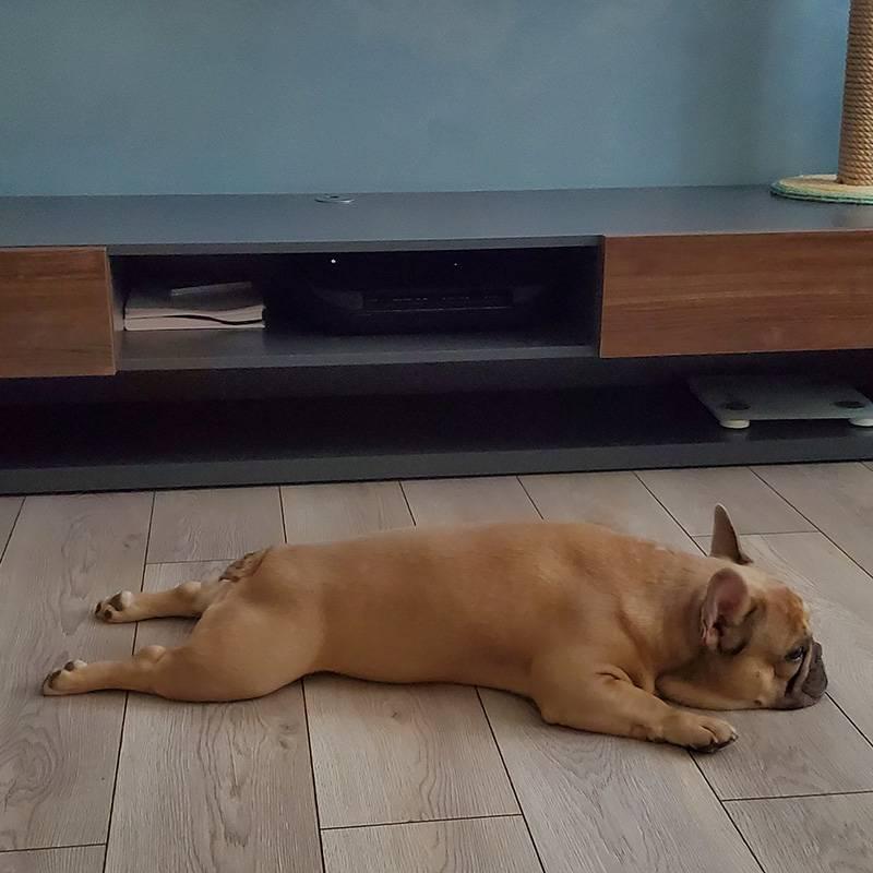 У нас французский бульдог. Это самая воспитанная и умная собака из всех, которые у меня были. Я его, конечно, дрессировала с первого дня, но получился настоящий умничка, не нарадуюсь
