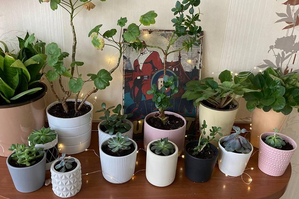 Моя коллекция суккулентов и других растений