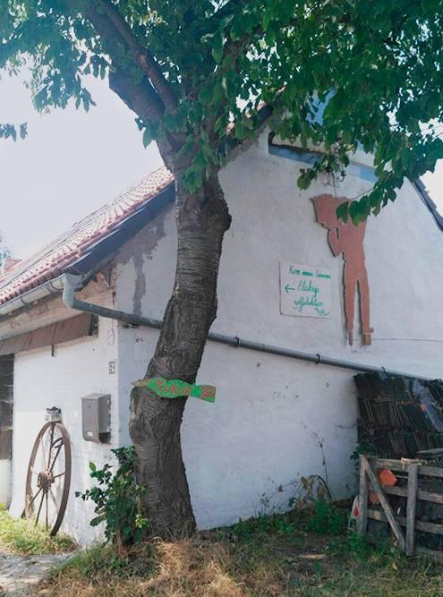 Дом, где живут Фрэнк и Мартина. В нем располагается зимняя кухня и библиотека, проходят общие собрания