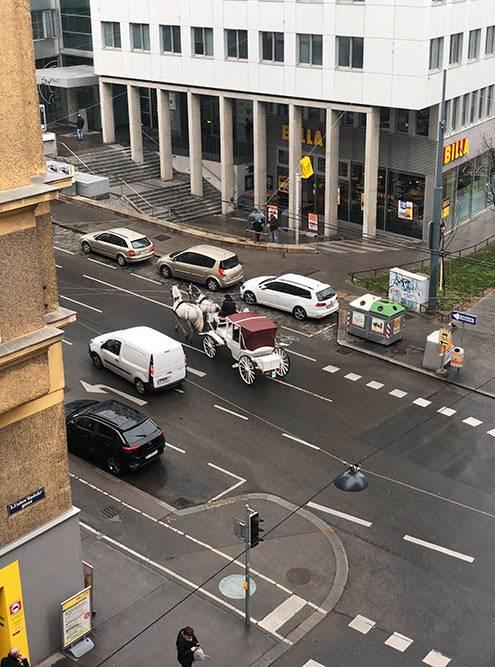 Подмоим окном каждый день проезжают кареты внаправлении старого центра. Типичная Вена