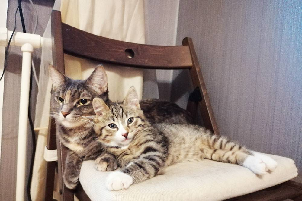 Я замечаю, что, глядя на взрослых кошек, котенок быстрее учится ходить в лоток и доверять людям. Они в буквальном смысле учат его жить в доме
