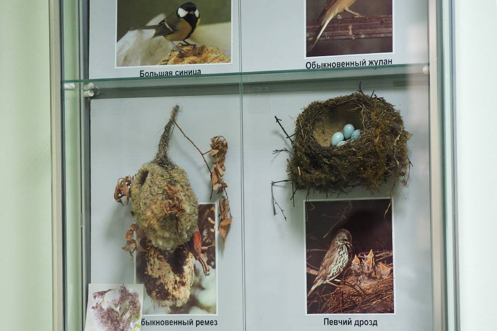 На экскурсии рассказывают об истории создания заповедника, видах животных и растений, которые там изучают и охраняют. Музей неинтерактивный, но длялюбителей изучать стенды интересной информации много