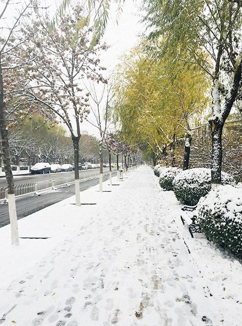 Зима в Пекине теплая, если сравнивать с центральной полосой России. Всего несколько раз за сезон тут выпадает снег, но если дует сильный ветер, то лучше одеваться потеплее