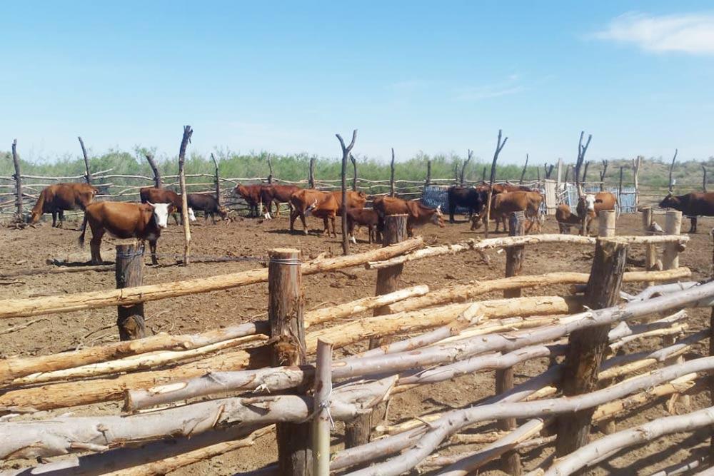 На грант WWF в Алматинской области крестьянская община закупила оборудование и организовала подачу воды длякрупного рогатого скота — это необходимый этап дляперевода животных на экологичное кормление. Источник: wwf.ru