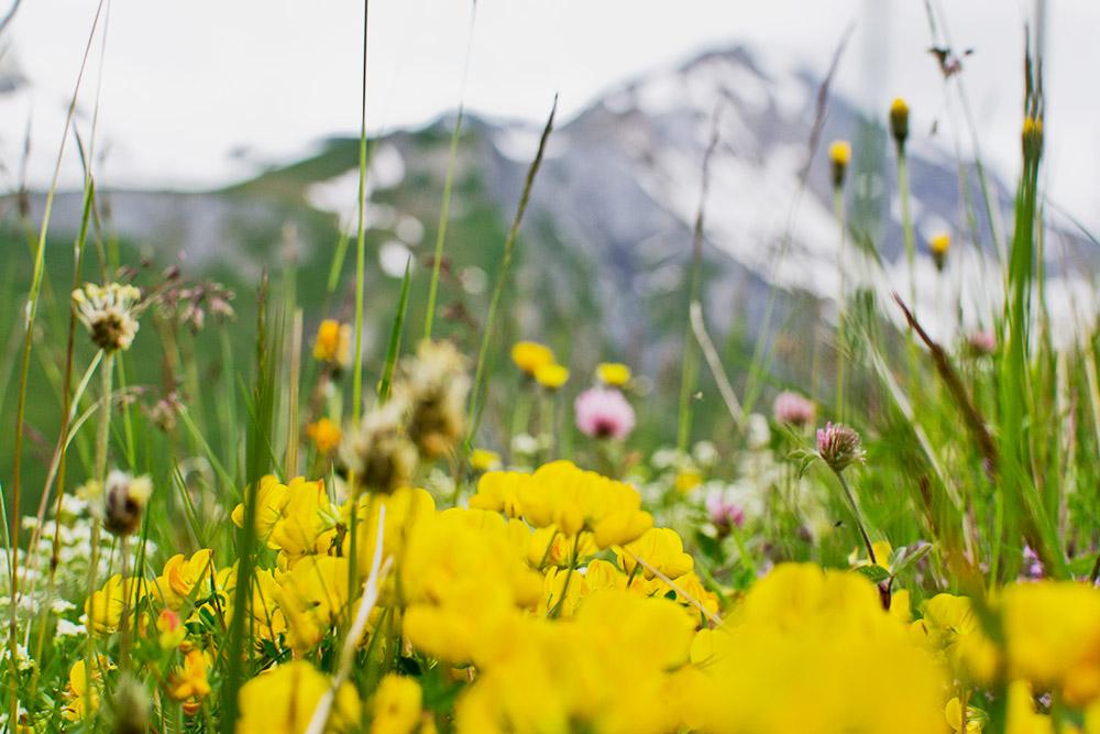 Июль — самый комфортный и красивый для посещения гор месяц. В это время там все цветет