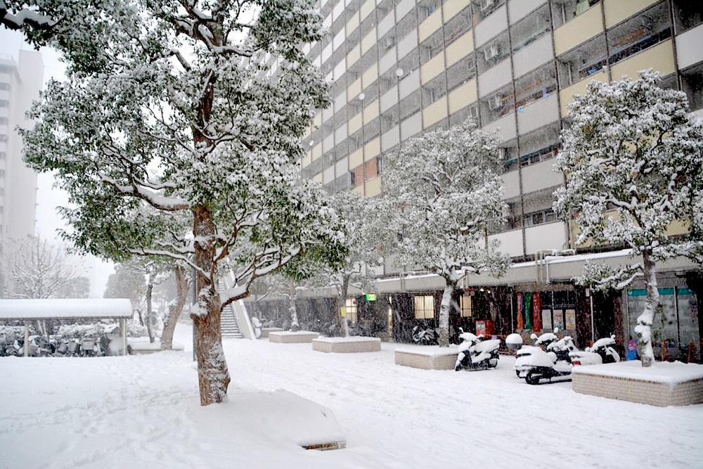 Снег в Токио выпадает раз в год. Если до вечера он не успевает растаять, в городе случается транспортный коллапс
