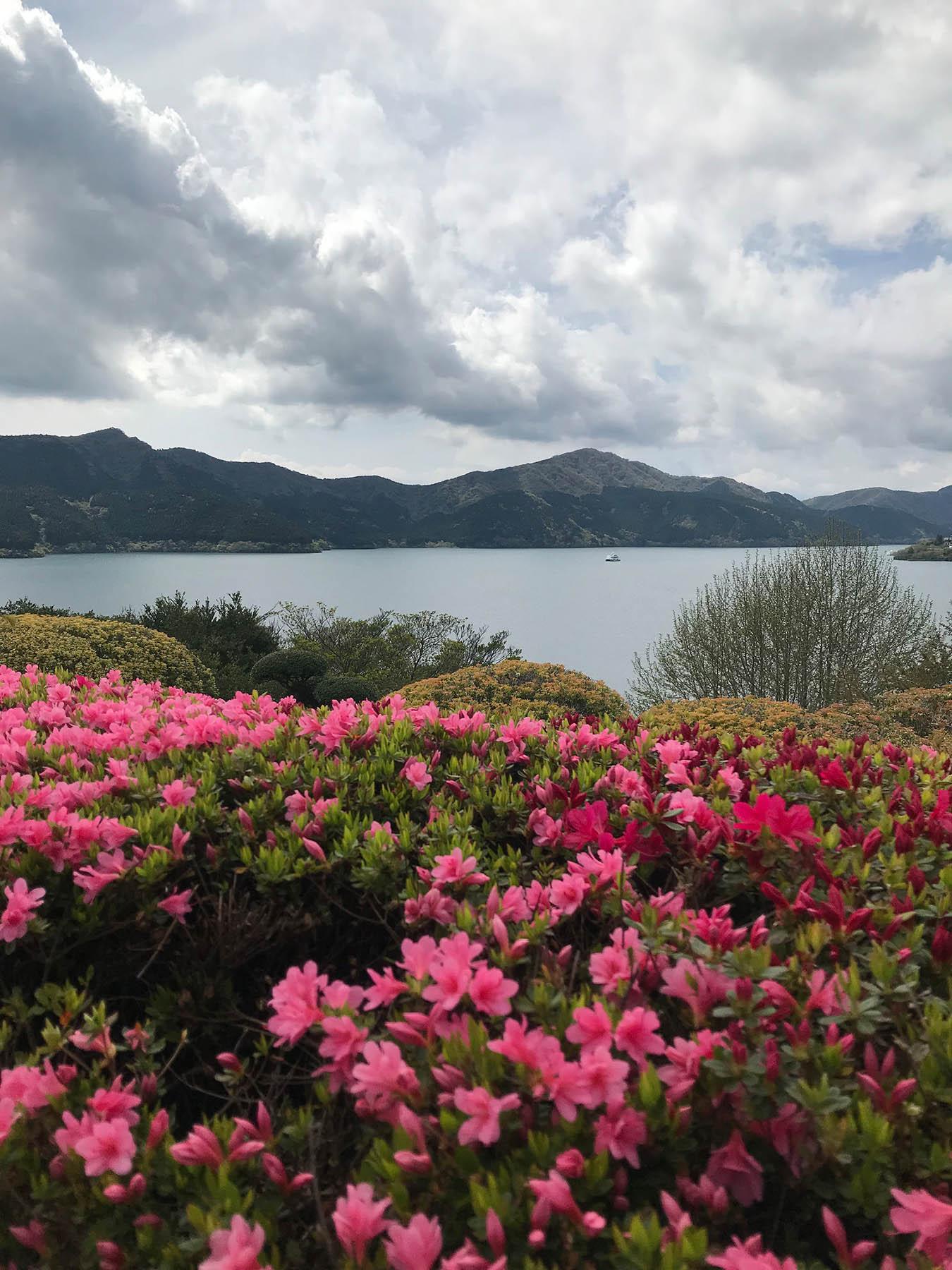 Весной и летом в Японии постоянно что-то цветет и помимо сакуры. Это озеро Аши на горном курорте Хаконе