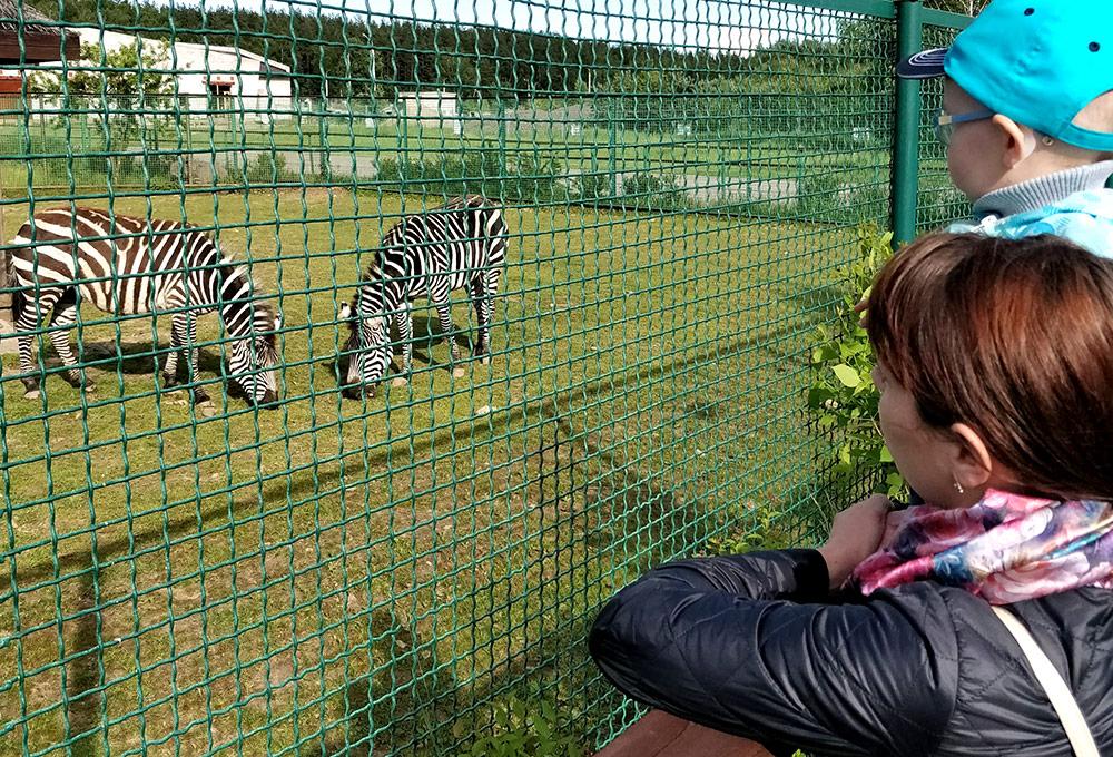 Животные в ярославском зоопарке живут в условиях, которые максимально приближены к естественным. Входной билет для взрослых стоит 250 рублей, дети до 7 лет — бесплатно