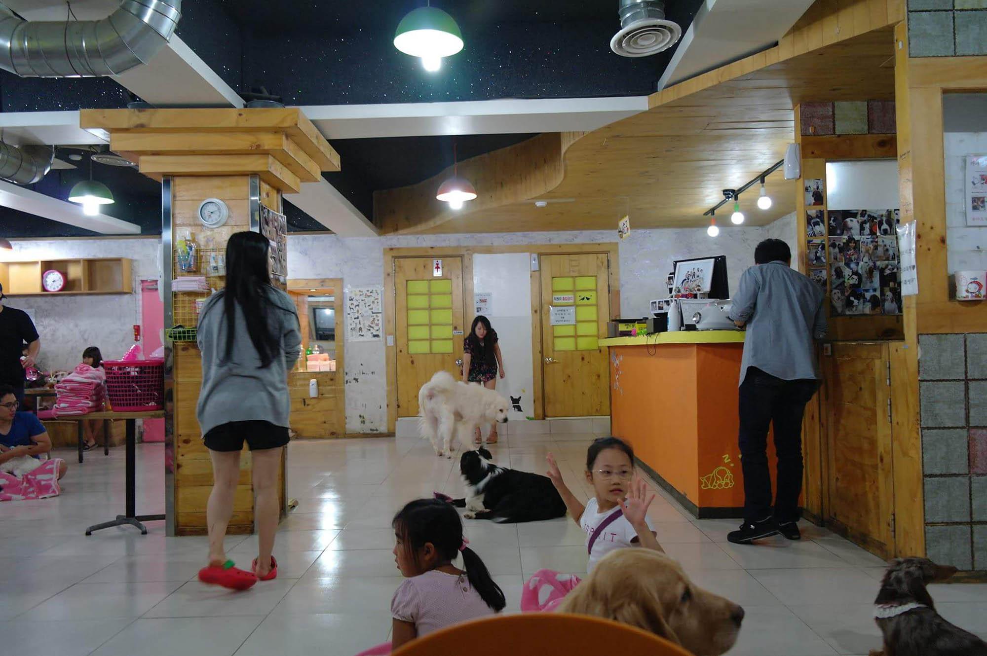 «Кафе с собаками» — Cafe Gaene Myeongdong. Вход платный — 6000 вон (322 р.). Кофейный напиток стоит 4000 вон (345 р.). Играть с собаками можно сколько угодно