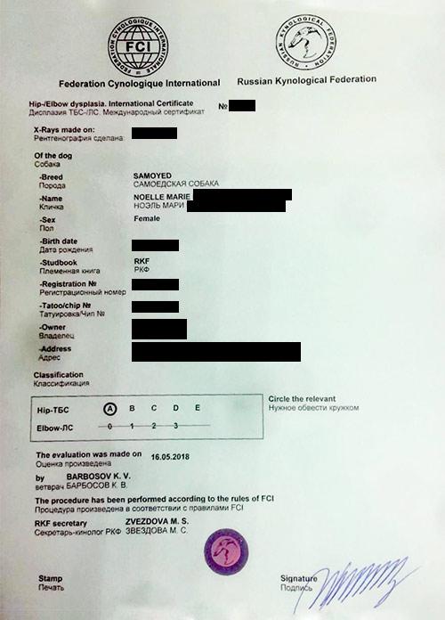 Подтверждение результатов теста на дисплазию из РКФ и международный офтальмологический сертификат. Все серьезно