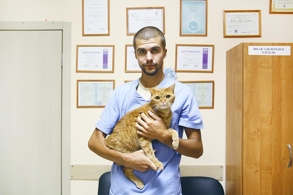 Кот Декстер на руках у Жени. Его с кошкой-сестрой отдали в клинику совсем маленькими. Врачи нашли им хозяев через волонтеров, но через какое-то время кота вернули, сказав, что он слишком активный. Ветеринары оставили его себе