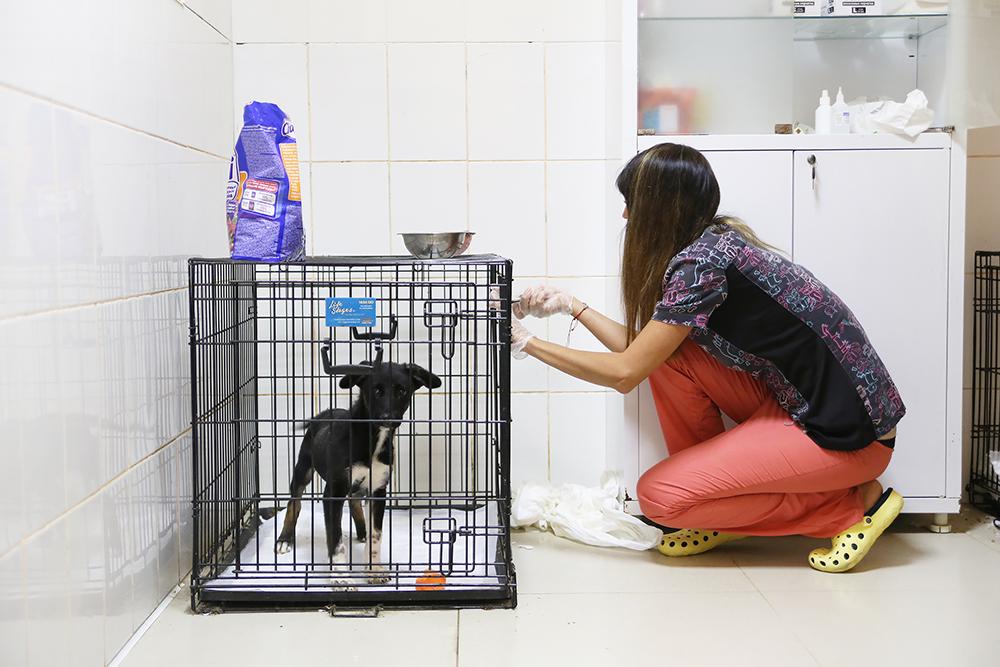 Катя кормит пса на лечении. Он уже почти выздоровел и ждет возвращения домой