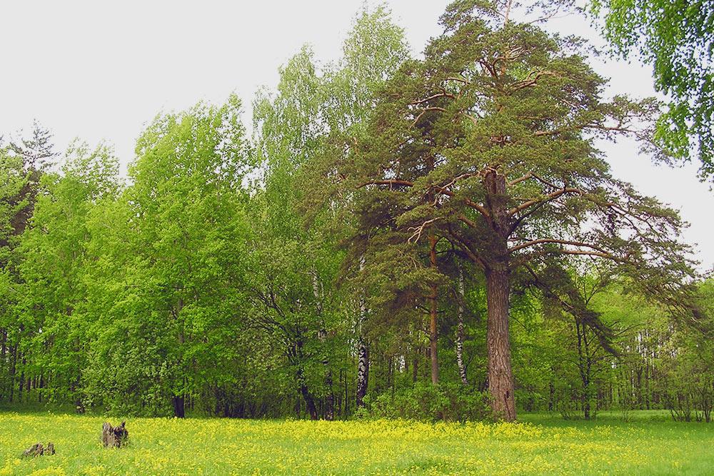 В целом республика считается краем заповедной природы. Земля здесь — одна из самых чистых в России по мнению Роспотребнадзора