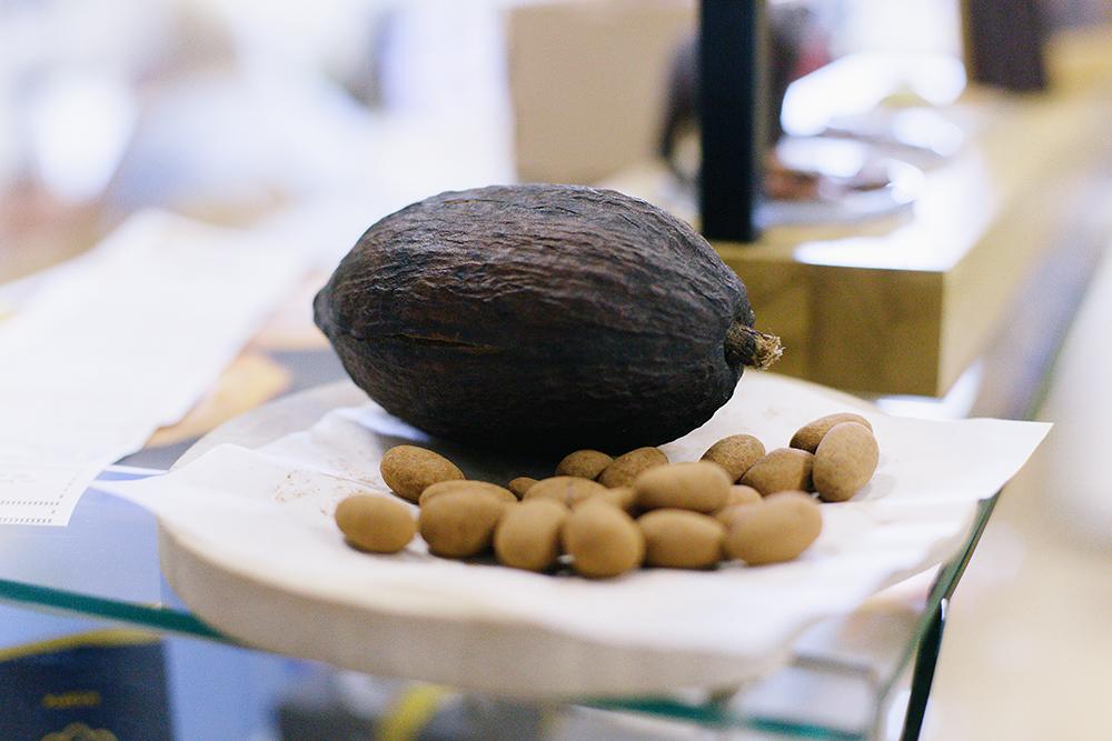 Вот так выглядит плод какао. Внутри спелого плода — от 30 до 50 бобов с горьким, вяжущим, не похожим на шоколад вкусом
