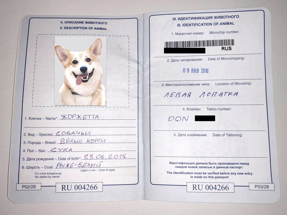 Ветеринарный паспорт Бусинки (Жоржетты по родословной). Справа вклеен номер микрочипа и стоит отметка с номером клейма