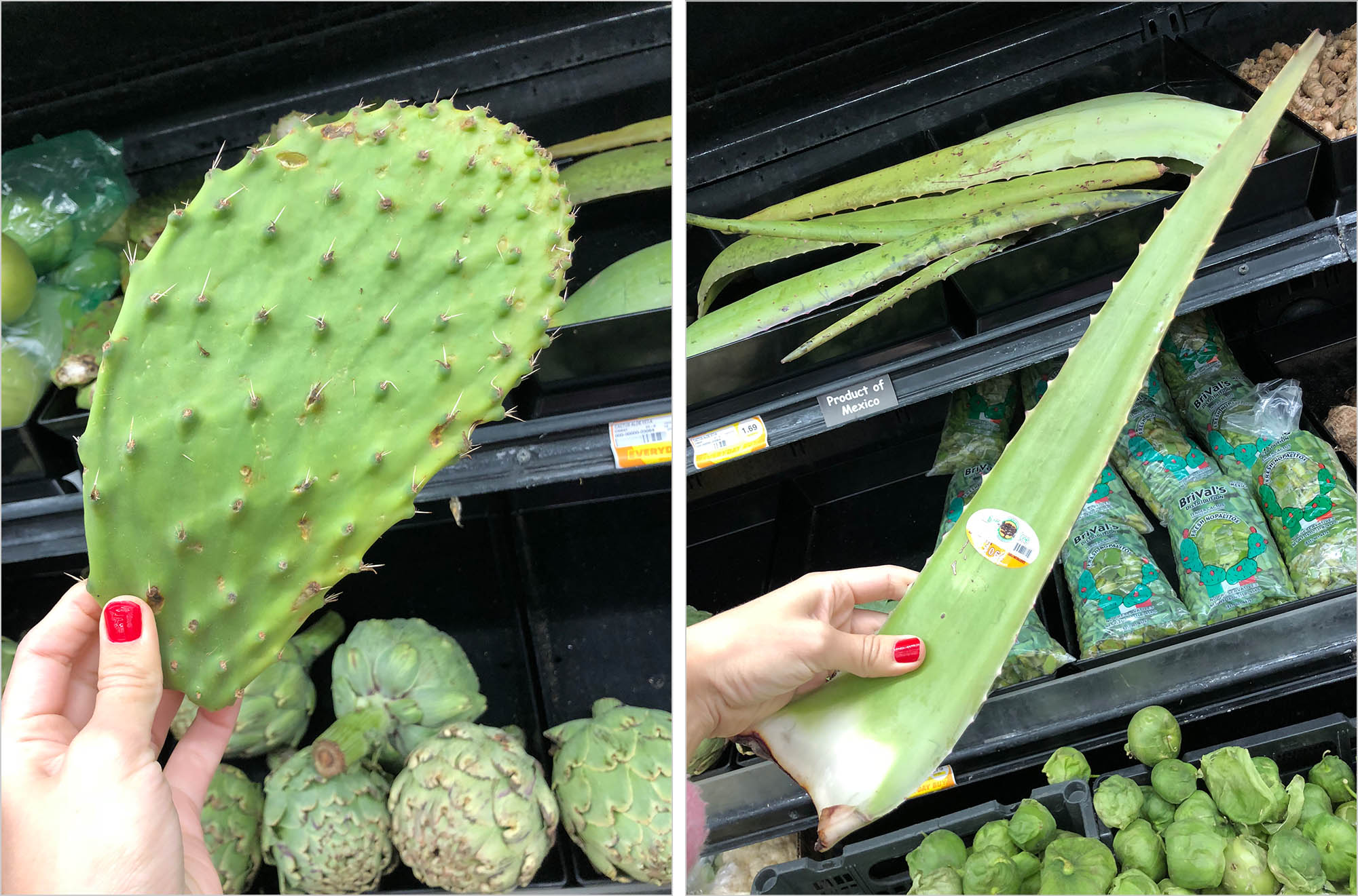 В овощном можно найти кактус и алоэ вера