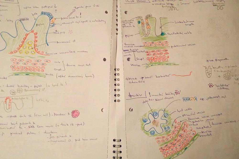 Пищеварительная система по версии гистологии — такие схемы я рисую регулярно, чтобы лучше запоминать материал