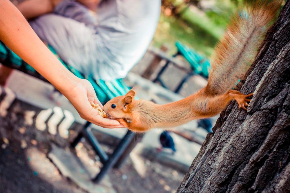 Летом и осенью в парке можно покормить белок прямо с руки