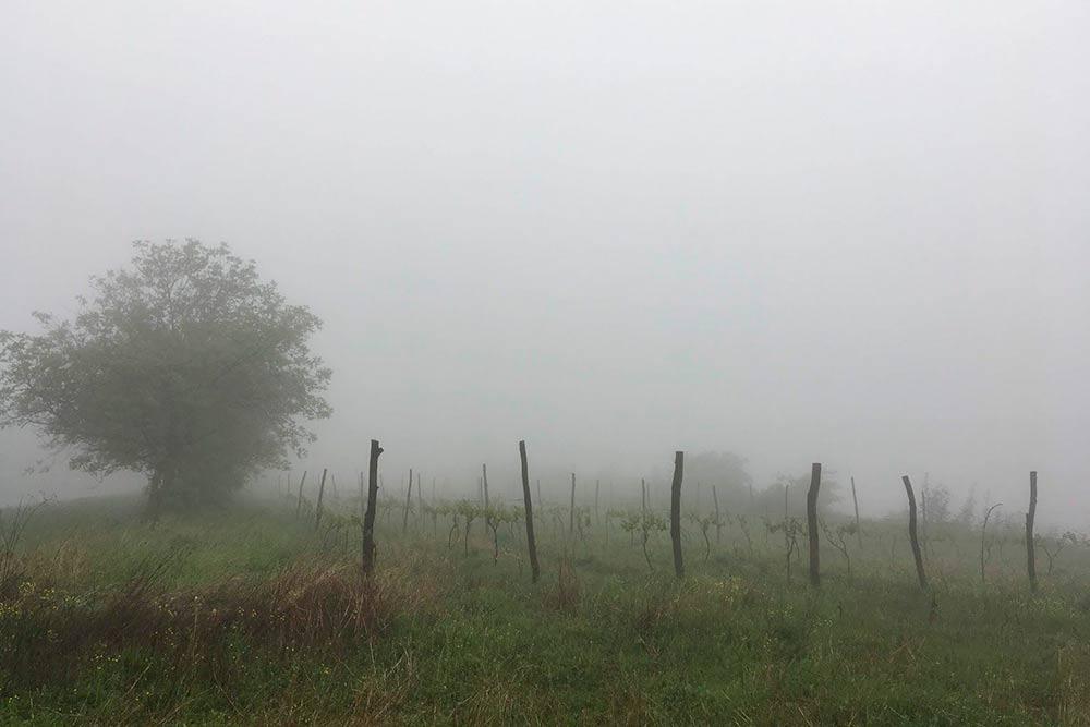 Поля виноградников, накрытые облаком, в Кахетии
