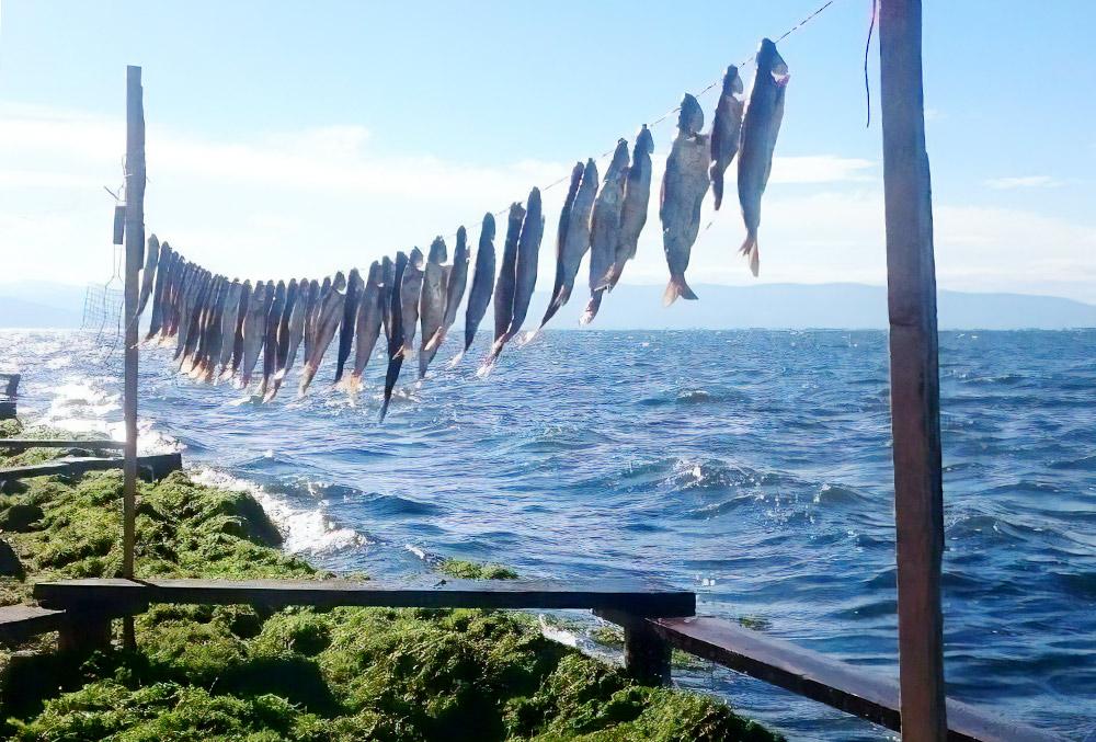 Улов рыбы на Чивыркуйском заливе. Фото: Наталья Чистова